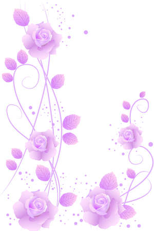 beautiful purple blossom roses on white background Stock Vector - 9242446