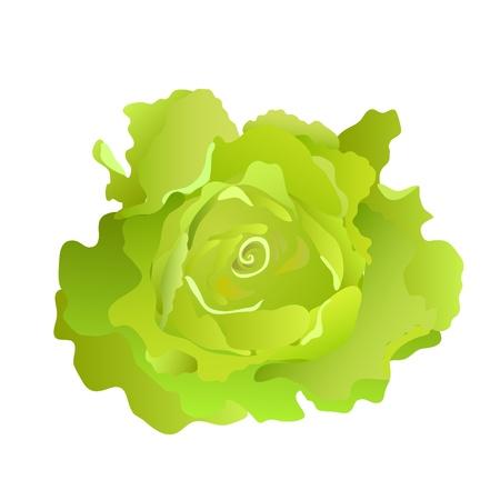 green roses on white background (illustration) Vector
