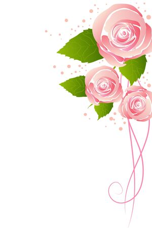 beautiful pink blossom rose on white background