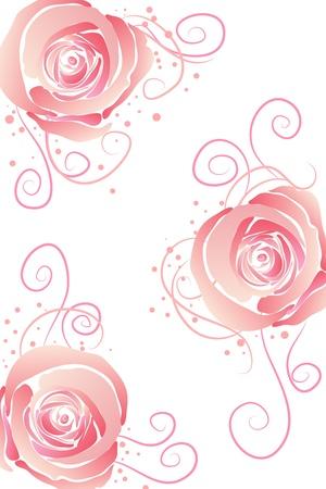 Rosas de bella flor rosa sobre fondo blanco
