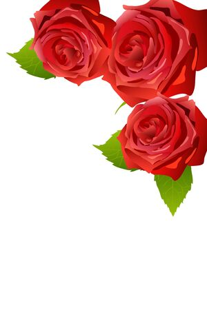 three colors: beautiful red blossom roses on white background Illustration
