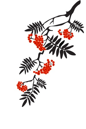 Berries of red Viburnum with leaves on white background Vector