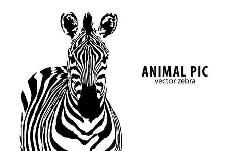 zebra: vector zebra with place for text