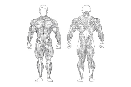 mannelijke spieren