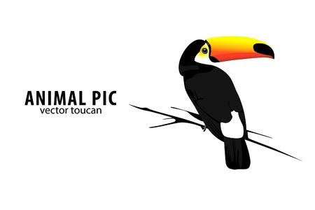 backgorund: illustration of a toucan on white backgorund