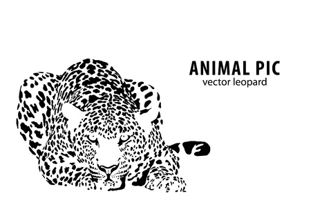 powerful: a leopard on white background Illustration