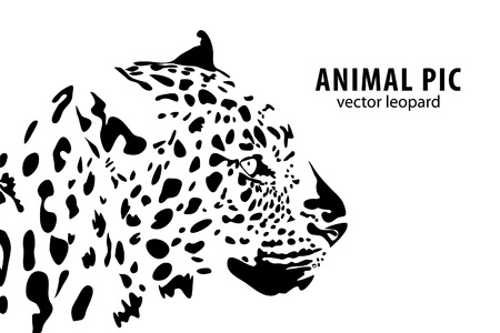 animals in the wild: a leopard on white background Illustration
