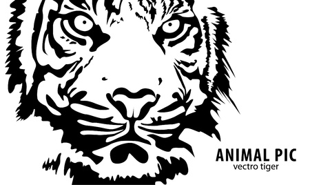 close up face: black tiger on white background Illustration