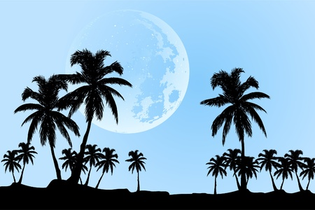 beautiful landscape (palm trees in the moonlight) Stock Vector - 9931220