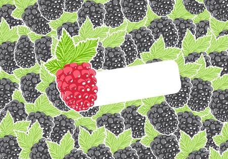 dewberry: Vector berry Illustration