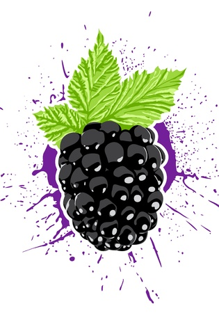 Vector berry