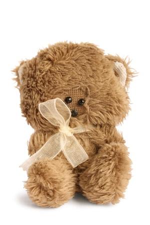 oso blanco: Lindo osito