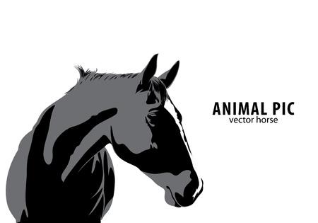 horse vector: Vector Horse