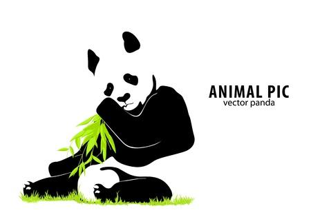 oso panda: vector panda Vectores