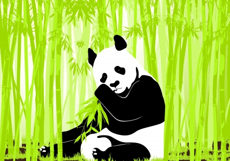 rare animals: Panda bear Illustration
