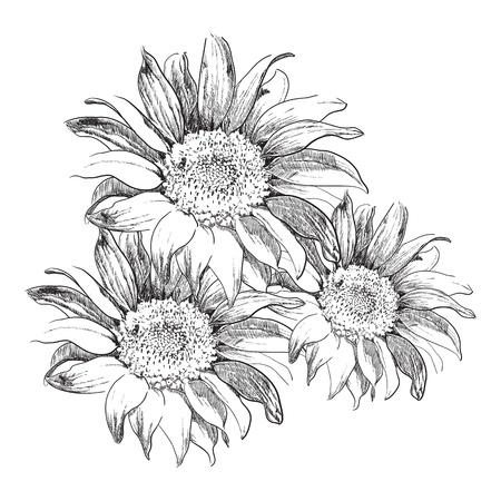 Sunflowers Stock Vector - 17994737
