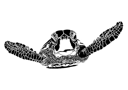 sea turtle: Turtle silhouette on white background