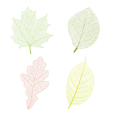 Leaf skeleton set on white background Vettoriali