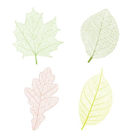 venation: Leaf skeleton set on white background Illustration