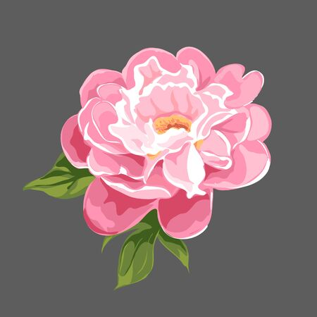 pink rose: floral background of bright peonies Illustration