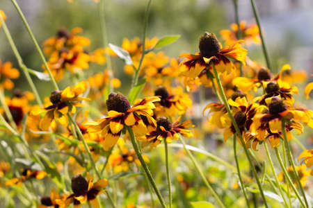 goodly: Beautiful flowers in sunny summer day
