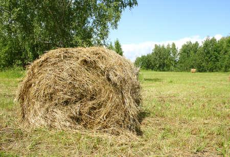 bail: Hay bail harvesting in sunny day