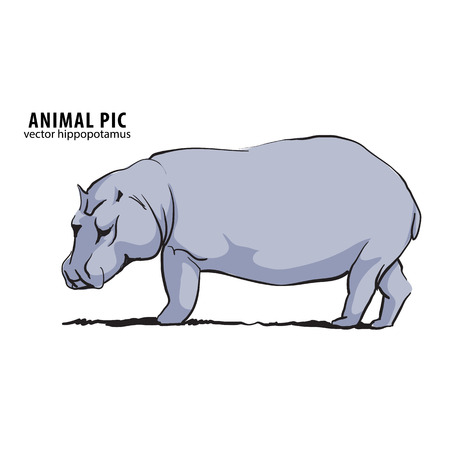 one of a kind: Illustration of hippo on white
