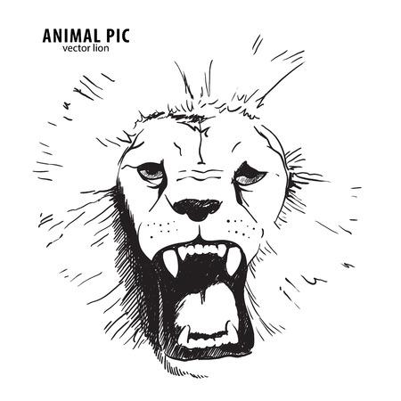 Sketch lion head on white