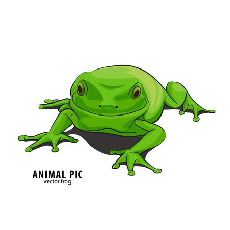 eyed: Illutration of frog on white background