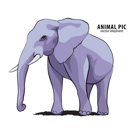 face side: Illustration of elephant on white
