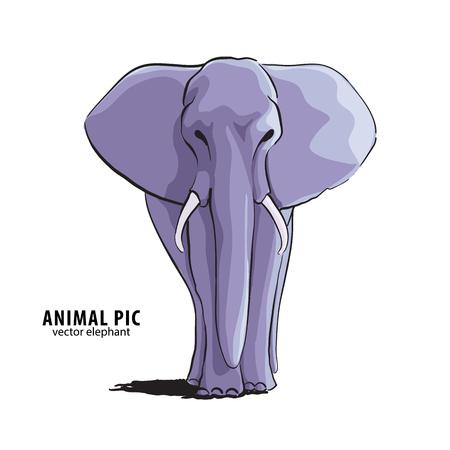 large size: Illustration of elephant on white