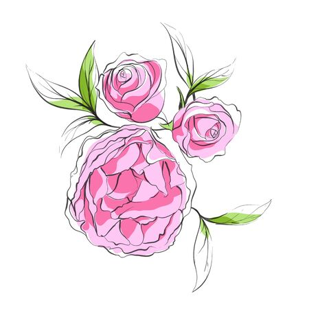 peonies: Bright floral background with peonies Illustration