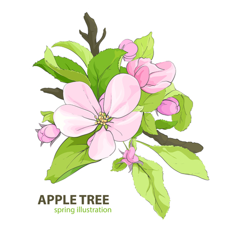 savor: floral illustration of apple tree blossom