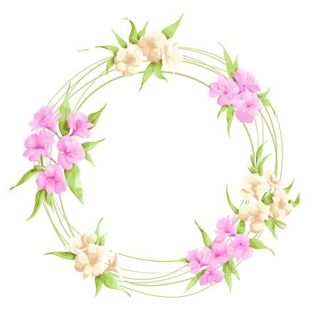 asteraceae: Alstroemeria flowers on white background