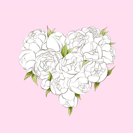 White peonies heart on pink background