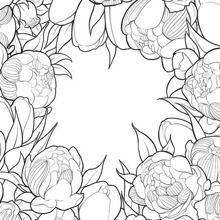 white frame: Frame of black and white peonies and roses Illustration