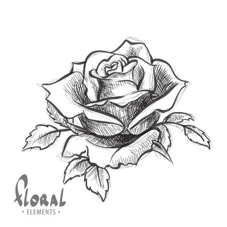 black and white: Lush rose in black and white