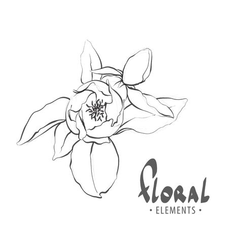 Sketch of peonies with leaves on a white background for your creativity, from a private collection of designer