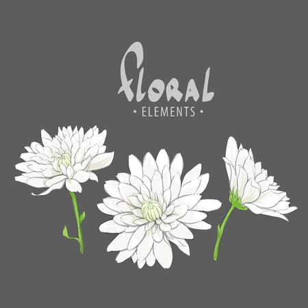 Delicate chrysanthemums on a white background for your creativity from a private collection of flowers