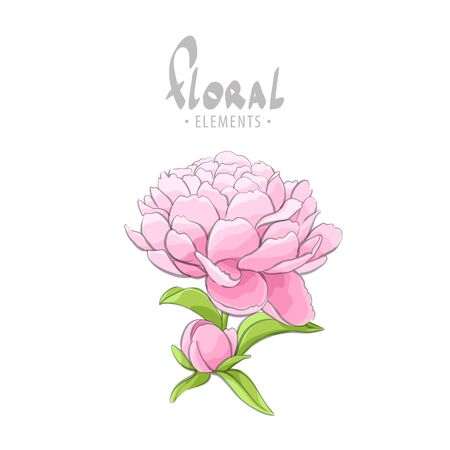 Beautiful peony for your girlfriend Illustration