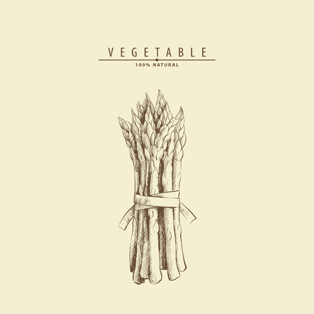 Hand drawn fresh tasty asparagus vector illustration