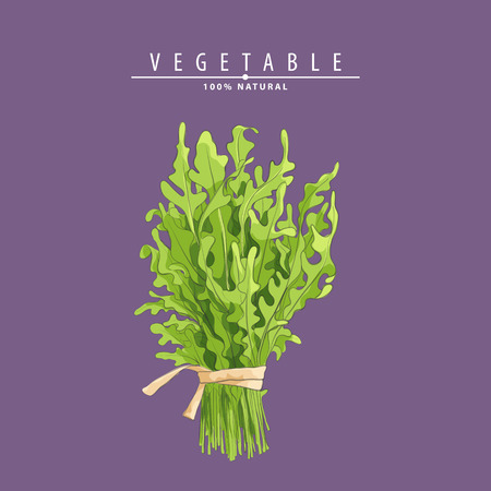 green fresh rucola veaves on purple background