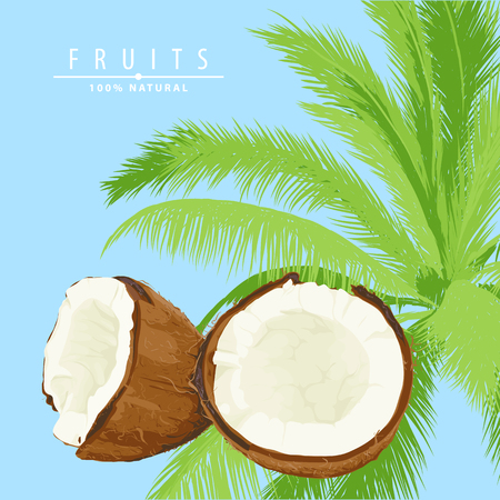 fresh coconut illustration with palm on background