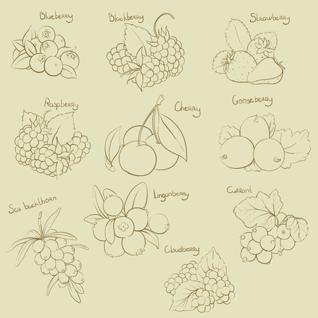 Vector illustration of outline berry set Illustration