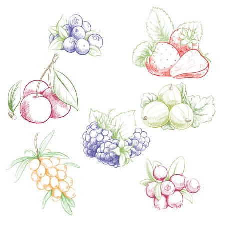 Fresh sweet vector illustration of berries set