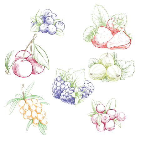 Fresh sweet vector illustration of berries set