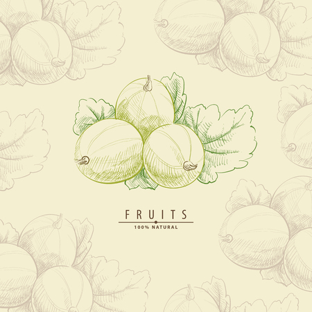 Sweet yummy vector illustration of gooseberry berry