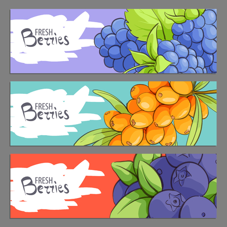 Fresh vector illustration of banners with berries on background