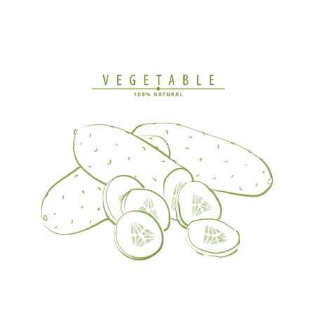 Vegetable vector illustration of cucumbers on light background