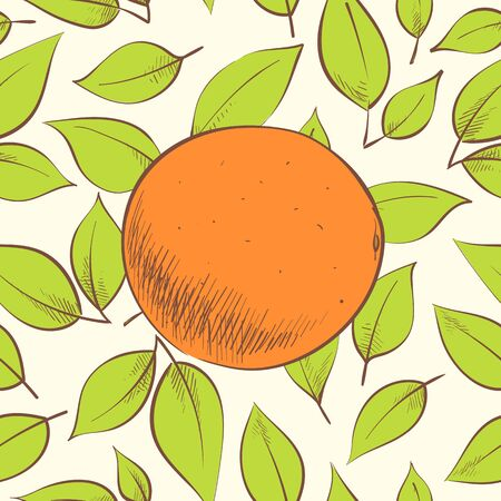 Fresh vector illustration of oranges on light background